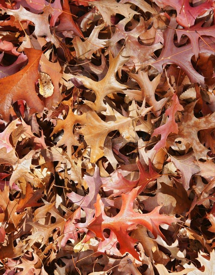 листья падения предпосылки осени стоковые изображения