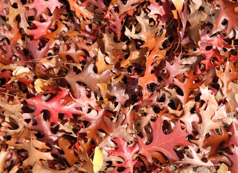 листья падения предпосылки осени стоковая фотография