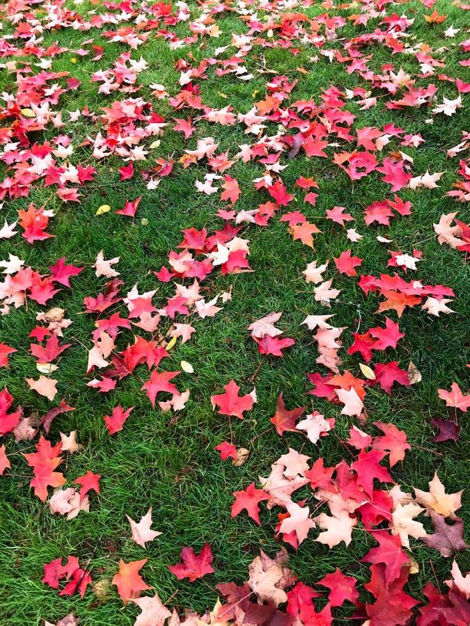 Листья падения предпосылки разбрасывают через зеленую траву стоковые фото
