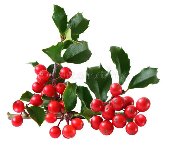 листья падуба ягоды стоковая фотография