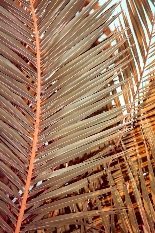 Листья пальмы стоковое изображение