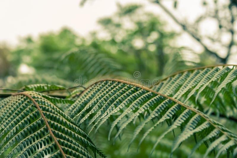Листья папоротника в тропическом лесе стоковые фото