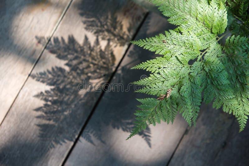 Листья папоротника и своя тень стоковая фотография rf
