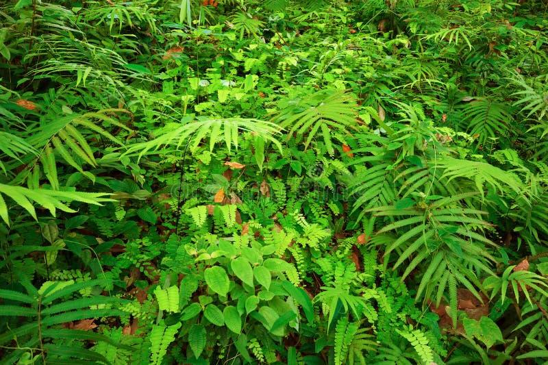 Листья папоротников и другая текстура тропических заводов естественная стоковые изображения rf