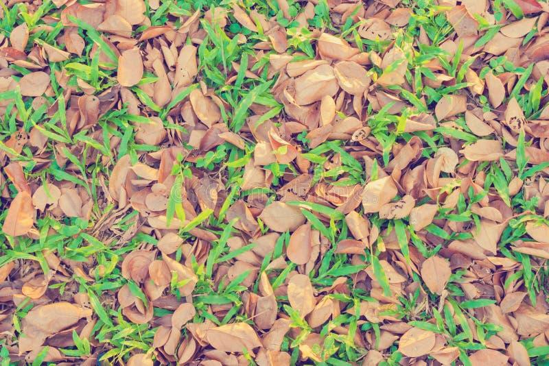 Листья падают, осень на земле для текстуры предпосылки стоковые изображения