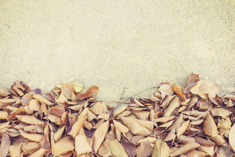 Листья падают, осень на текстуре предпосылки улицы стоковые изображения rf