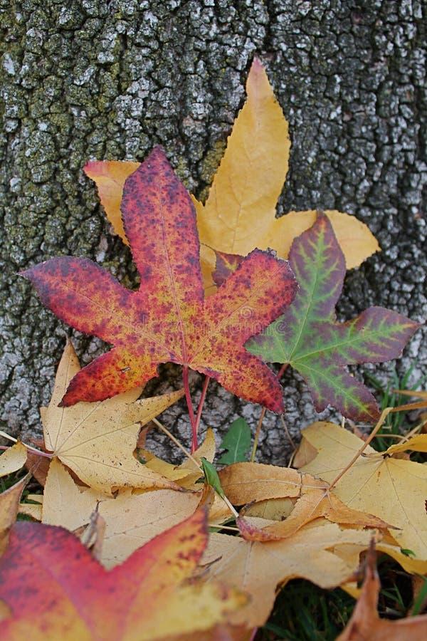 Листья падали стоковое изображение
