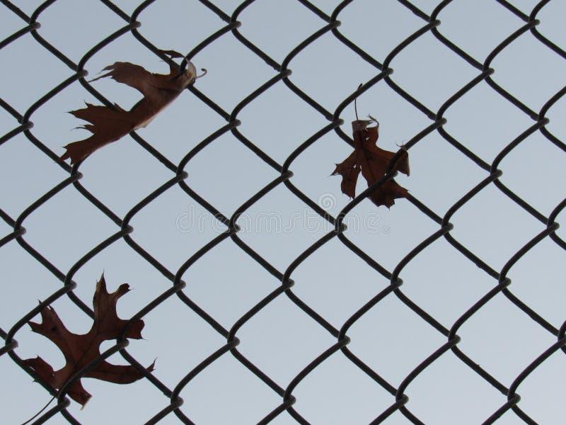 Листья падения зацеплянные загородка стоковые изображения rf