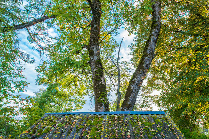 Листья падения на крыше стоковое фото rf
