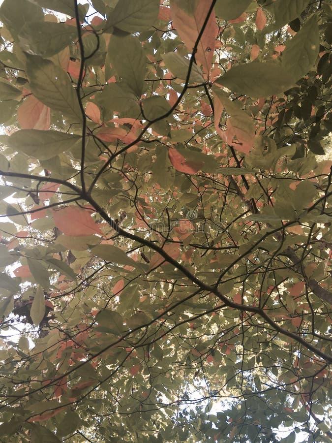Листья падения пинка и зеленого цвета стоковое фото rf