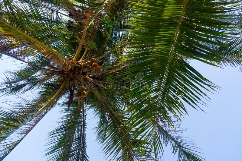 Download Листья пальмы стоковое фото. изображение насчитывающей лето - 40583300