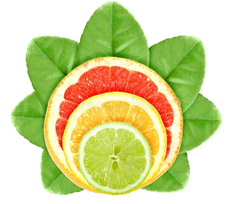 листья перекрестных плодоовощей цитруса зеленые стоковое изображение