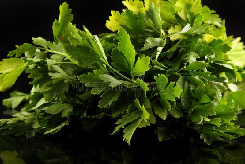 Листья петрушки конца-вверх с падениями росы на черной предпосылке стоковые фото