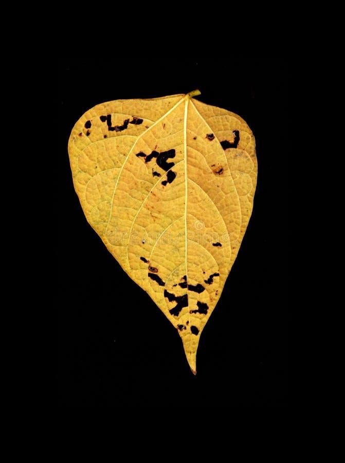 листья покрашенные осенью стоковые фото