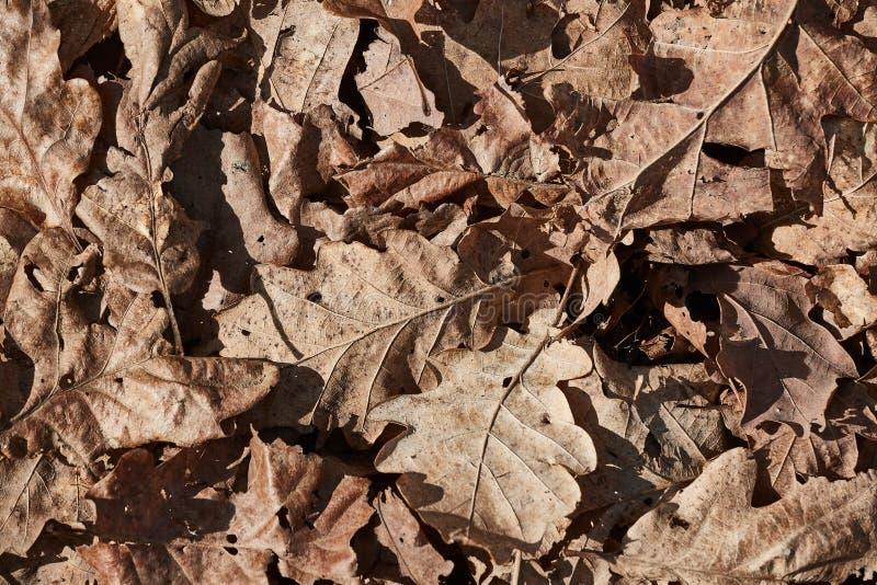 Листья пола леса сухие стоковые изображения rf