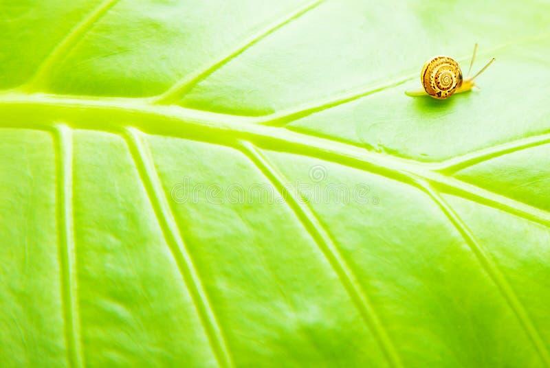 листья предпосылки зеленые естественные стоковое фото