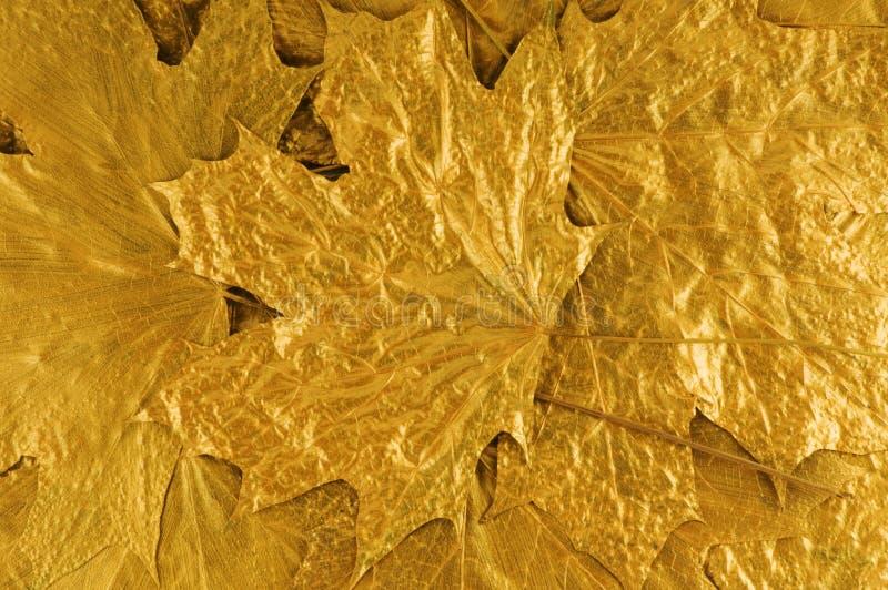 листья предпосылки золотистые стоковая фотография