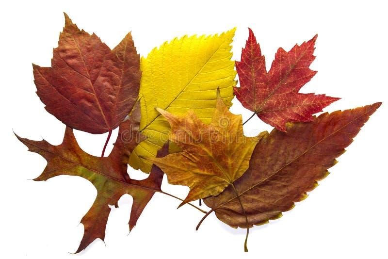 листья предпосылки осени смешали стоковое изображение rf