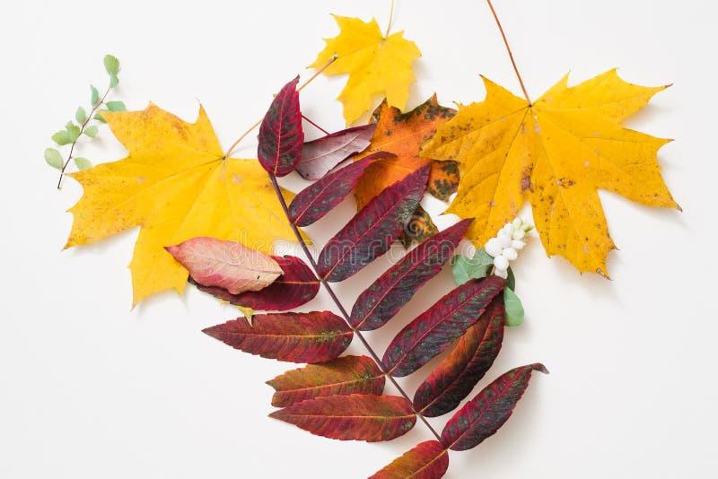 Листья предпосылки осени темы природы желтые красные стоковое изображение rf