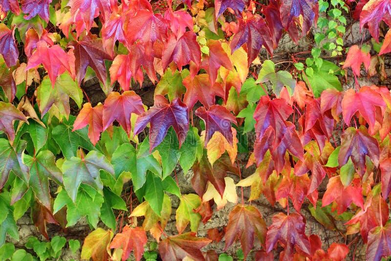 листья предпосылки осени цветастые стоковая фотография