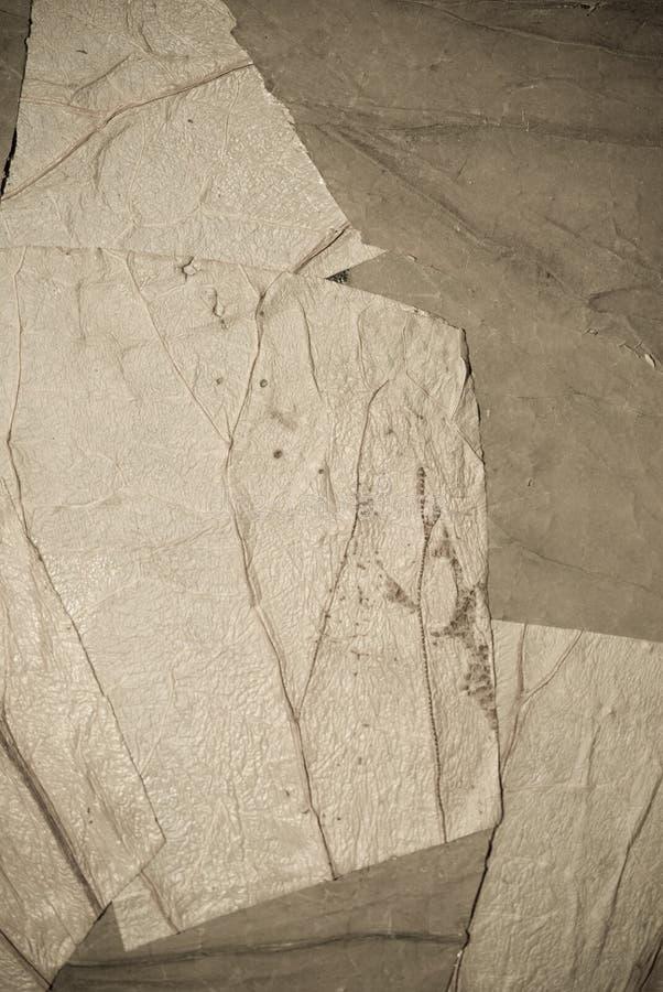 листья предпосылки стоковая фотография