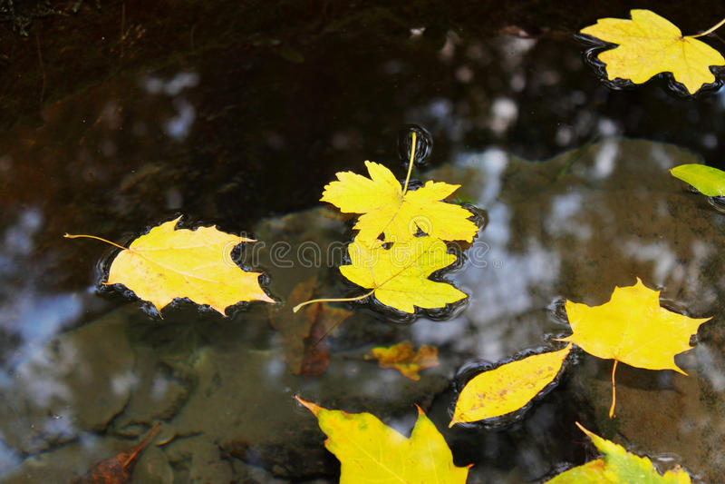 Листья плавая в воду стоковые фотографии rf