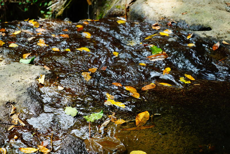 Листья плавая в настоящий поток стоковое фото