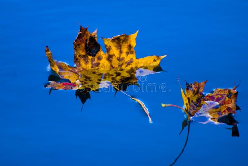 Листья плавая на пруд осенью стоковое фото rf