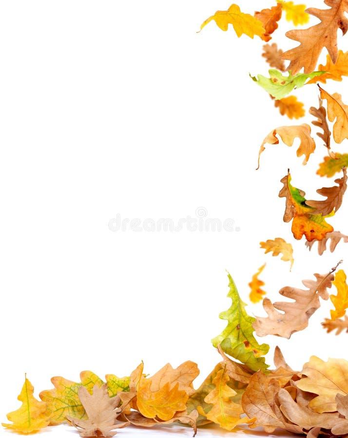 листья рамки осени стоковые изображения