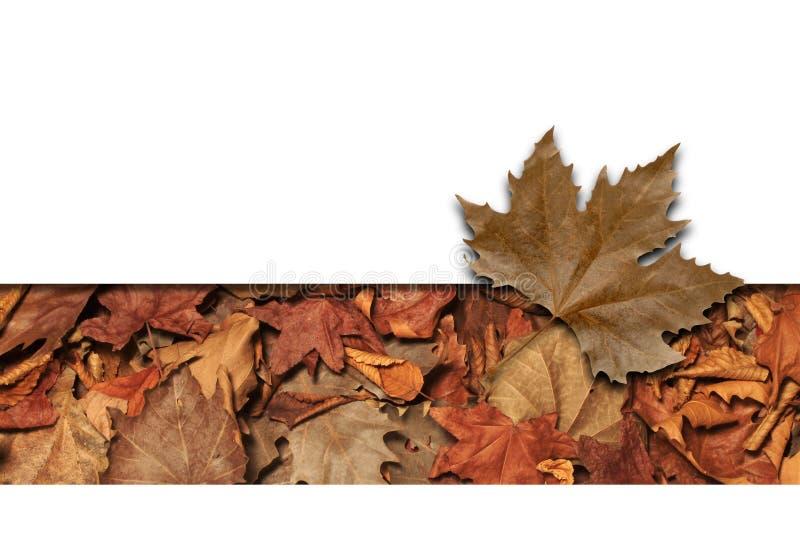 листья рамки бесплатная иллюстрация