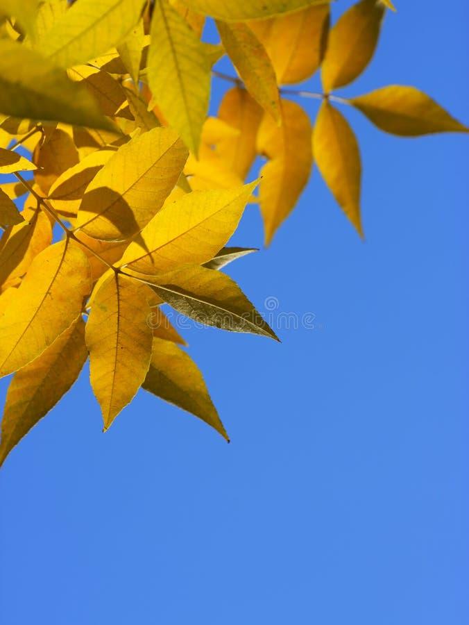 листья рамок стоковые изображения rf