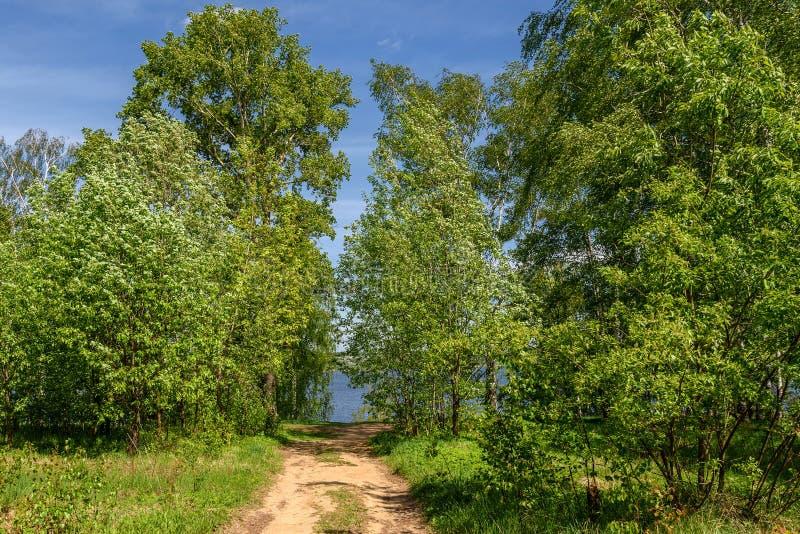 Листья реки рощи березы стоковые фото