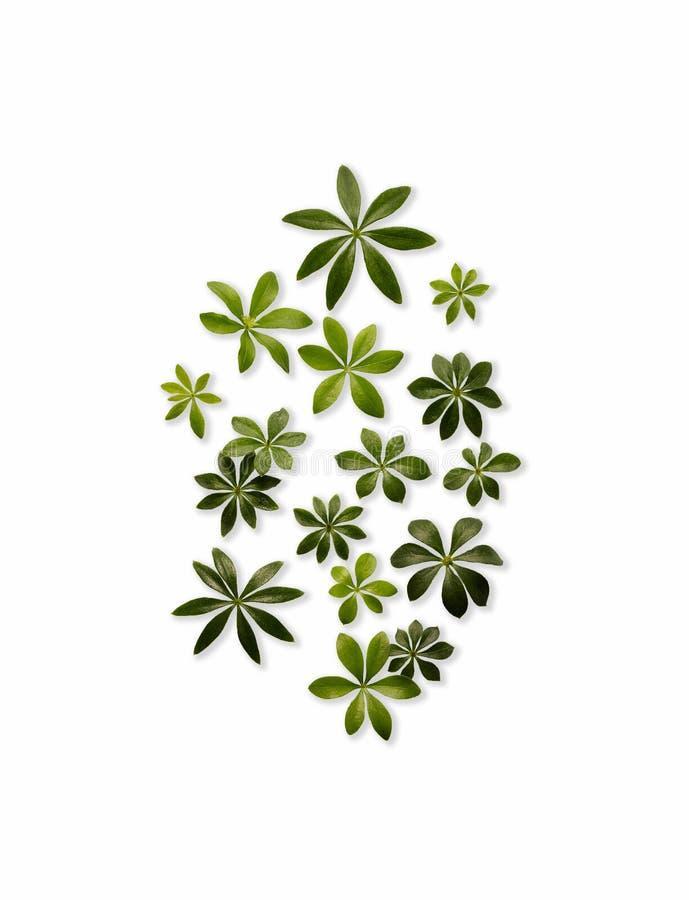 Листья дровосека стоковое фото