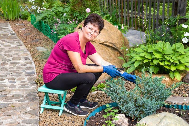 листья сада осени сгребая работу Положительная усмехаясь старшая женщина режа coniferous завод используя изгородь режет на ей стоковое фото