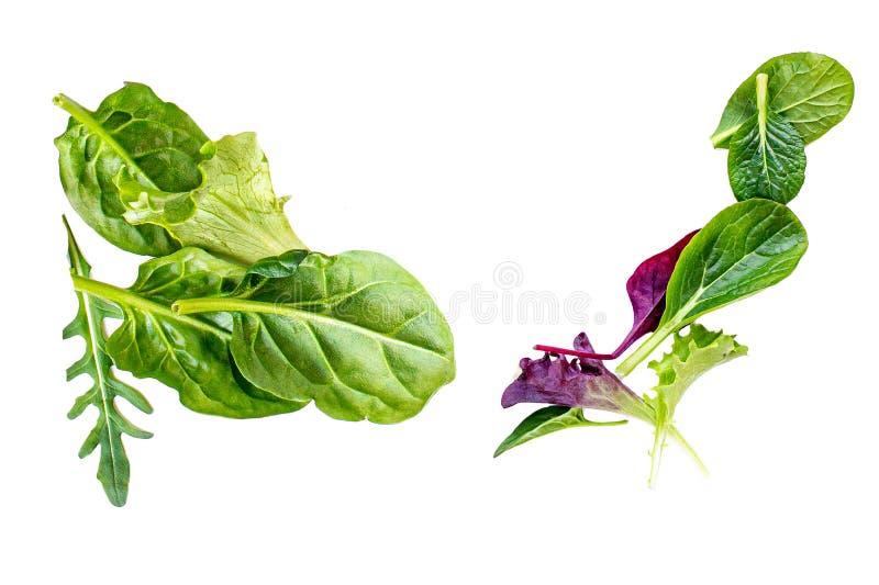 Листья салата изолированные на белой предпосылке Зеленый салат с лист arugula, салата и шпината стоковые фото
