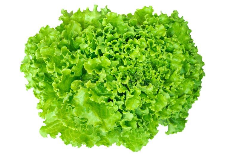 Листья салата изолированные на белой предпосылке стоковая фотография