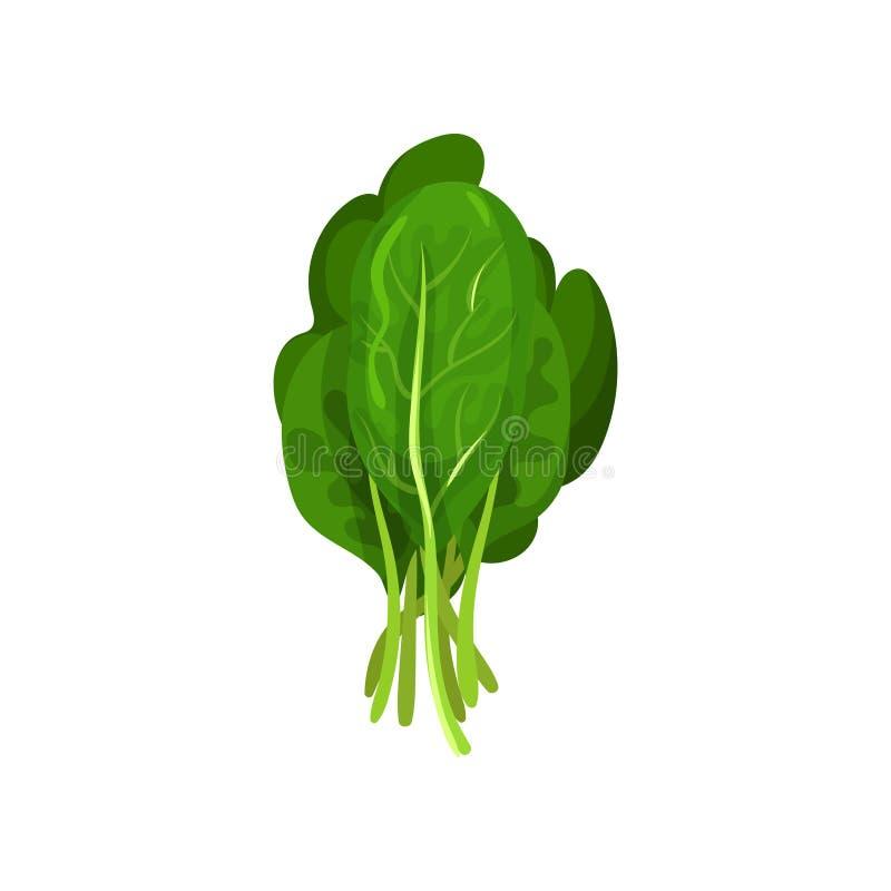 Листья салата листовой капусты свежие, здоровая органическая вегетарианская еда, иллюстрация вектора на белой предпосылке иллюстрация вектора