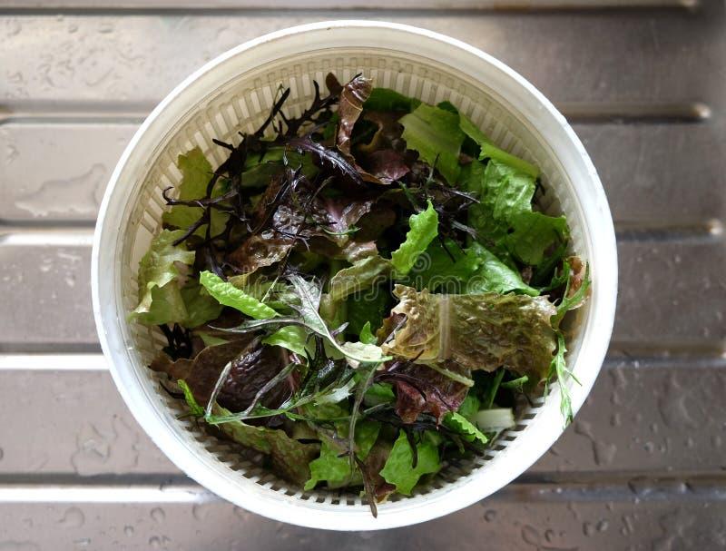 Листья салата в обтекателе втулки стоковое изображение rf