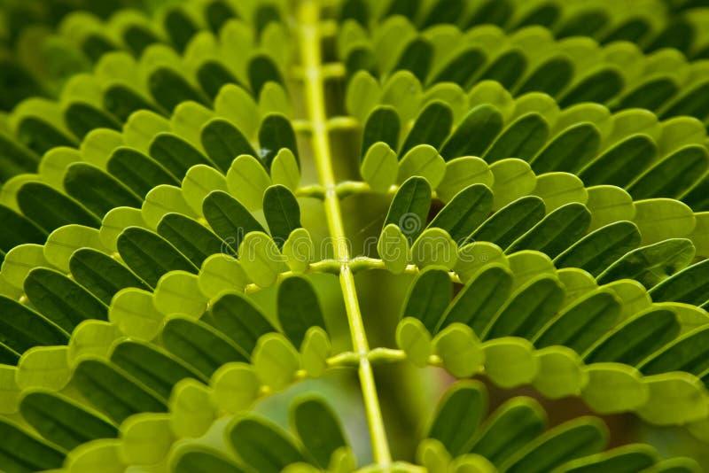 листья сделали картины стоковое изображение rf