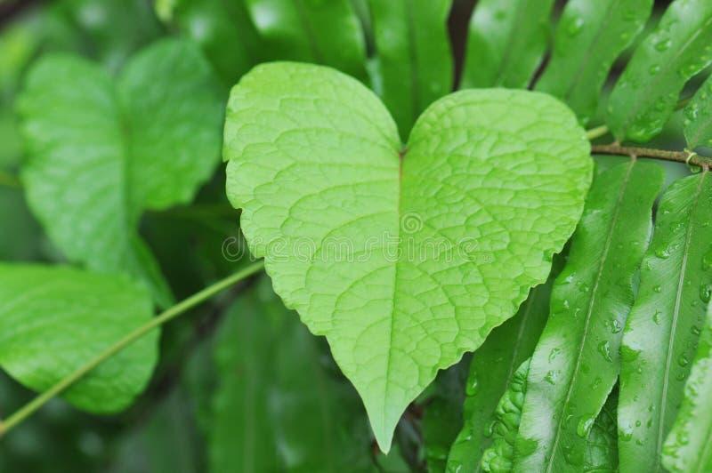 листья сердца сформировали стоковые фотографии rf