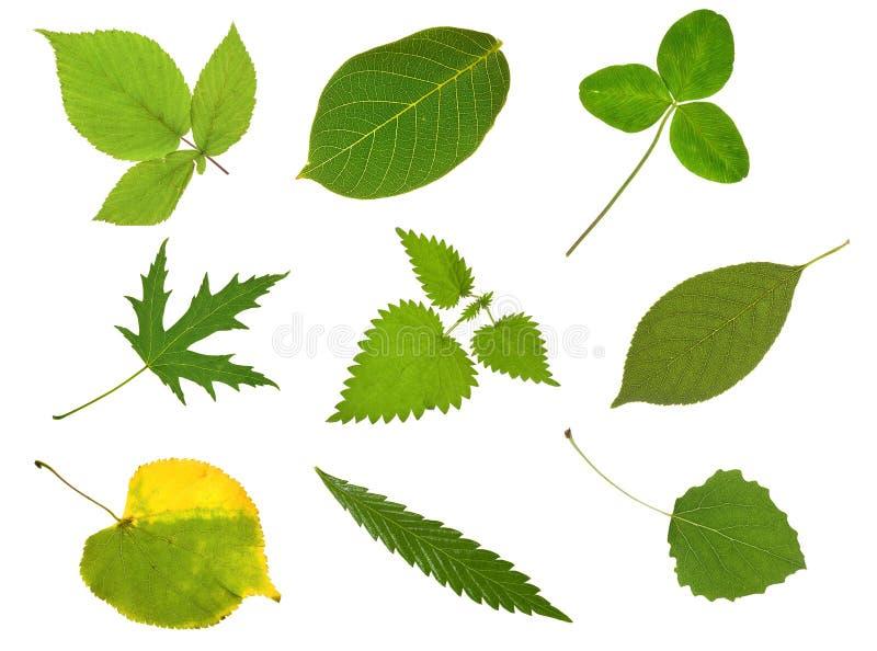 листья собрания стоковые фотографии rf