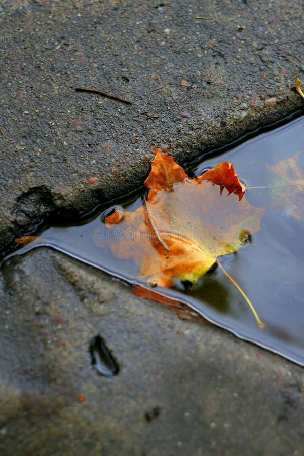 листья сточной канавы стоковое изображение
