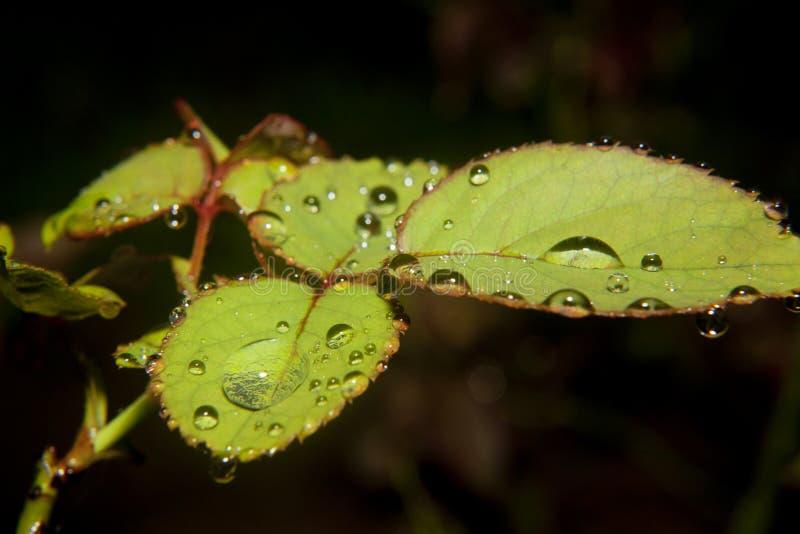 Download Листья с падениями воды стоковое фото. изображение насчитывающей внимательность - 37931022