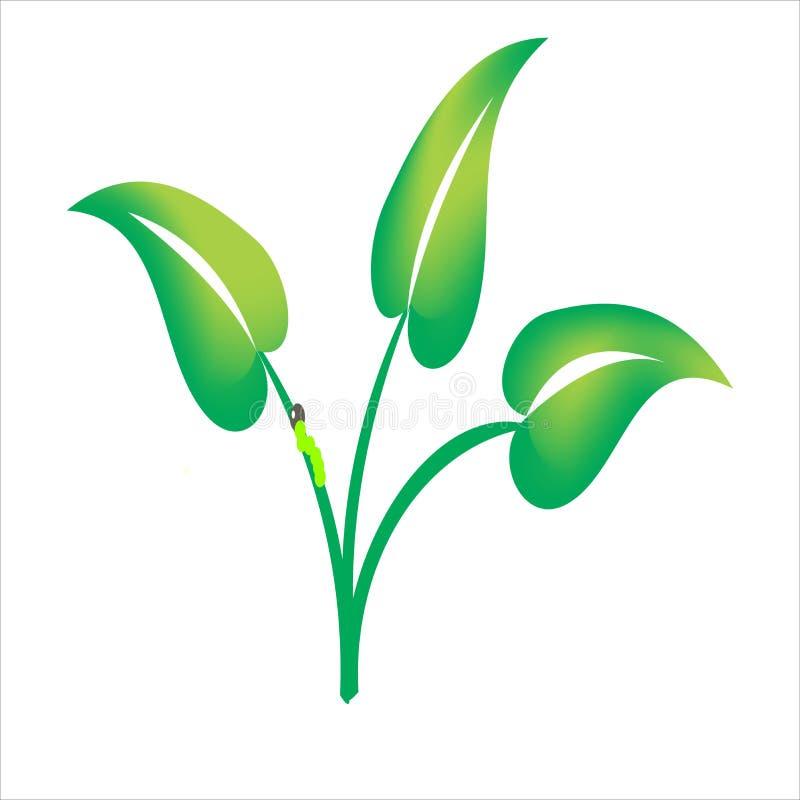 Листья таро стоковое фото