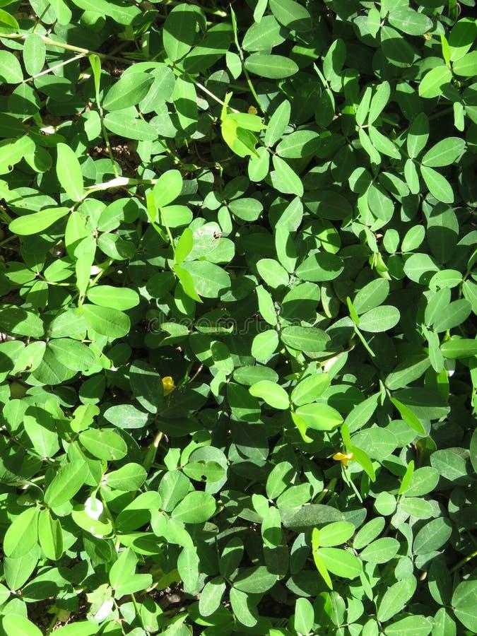 Листья - текстура стоковые изображения rf