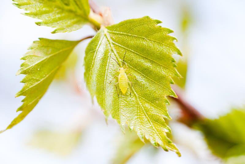 листья тлев стоковые изображения rf