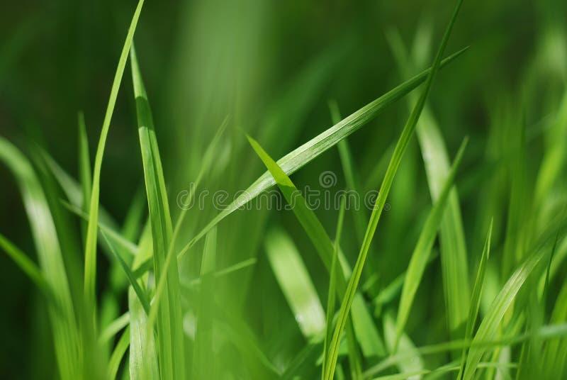 Листья травы стоковое изображение rf