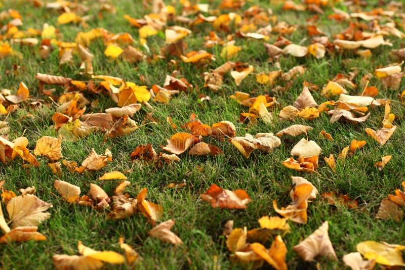 Download листья травы стоковое изображение. изображение насчитывающей peeper - 6862897
