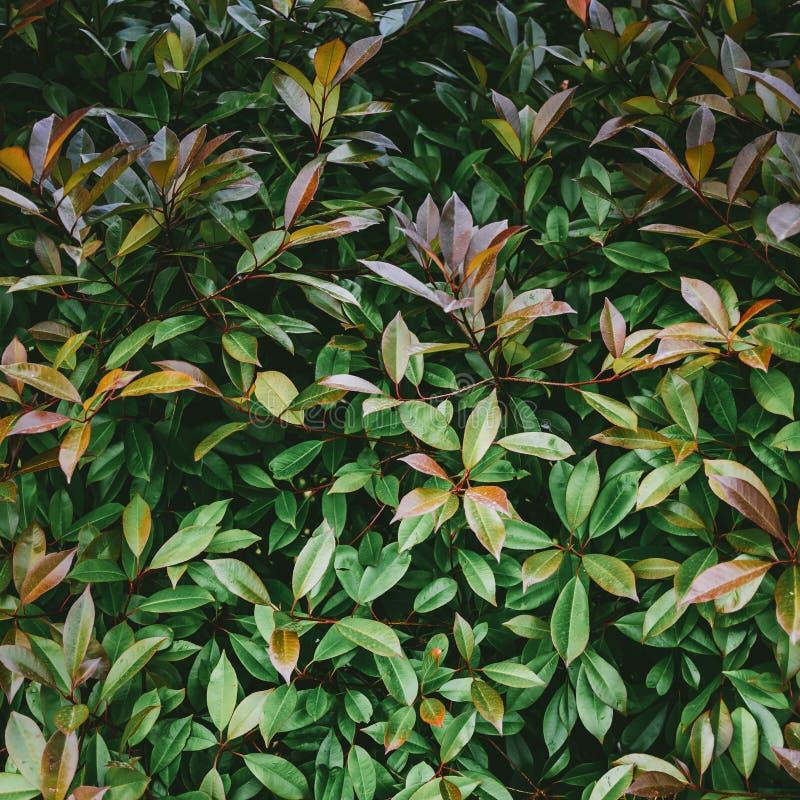 Листья тропического завода стоковые изображения rf