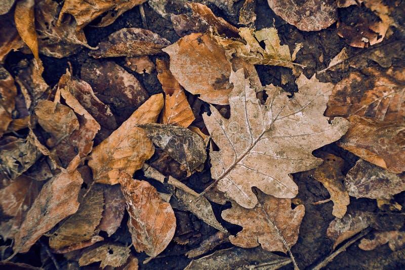 листья упаденные осенью стоковое фото rf